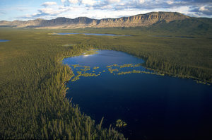 A lake in the Canadian boreal forest. (Boreal Songbirds Initiative photo)
